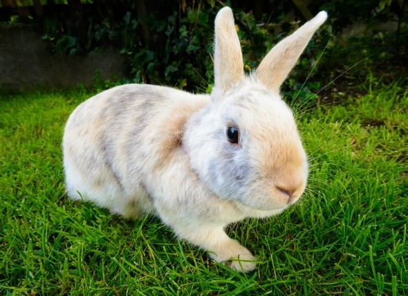 Infection in the Bladder or Urinary Tract in Rabbits petMD