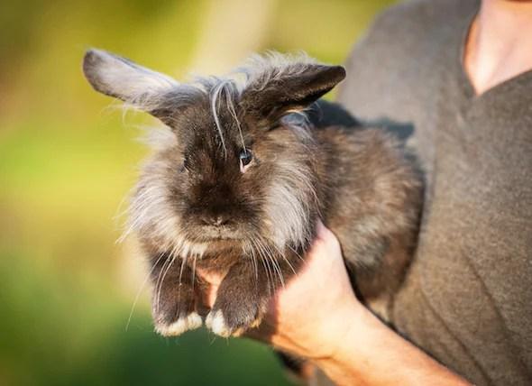 Rabbit Fun Facts petMD