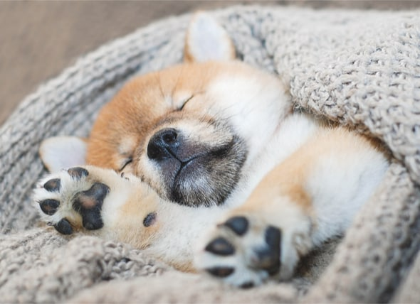 Your New Puppy The Ultimate Puppy Sleeping Guide petMD
