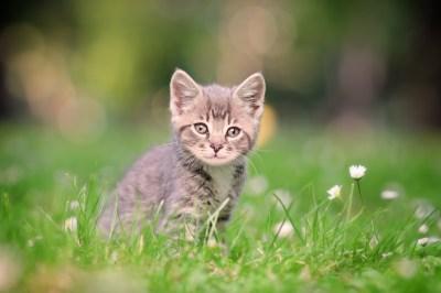 Top Five Cat Toxins of 2012 - Common Cat Poisons - Pet Poison Helpline
