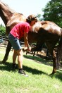 Equine Therapy: Leg Stretches