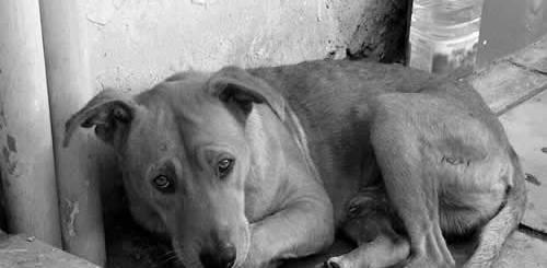 petrede-cachorro-de-rua-abandonado