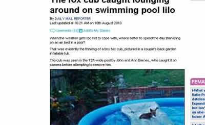 petrede-filhote-de-raposa-na-piscina