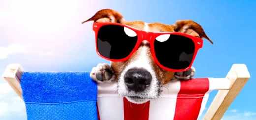 cachorro-calor-verao-oculos-sol-praia-piscina-petrede