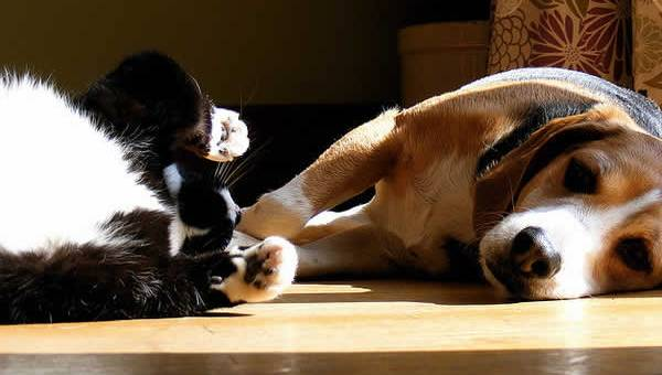petrede-cachorro-e-gato-deitados-tomando-sol