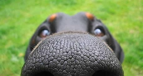 petrede-cachorro-focinho
