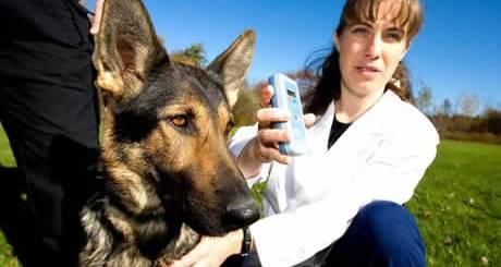 petrede-cachorro-microchip-leitora