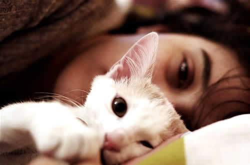 petrede-protetor-animal-gato-cama-deitado