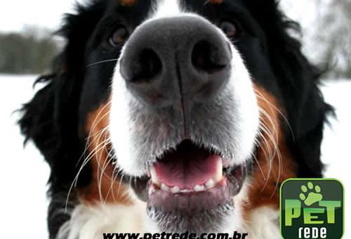 cachorro-boca-sorriso-petrede