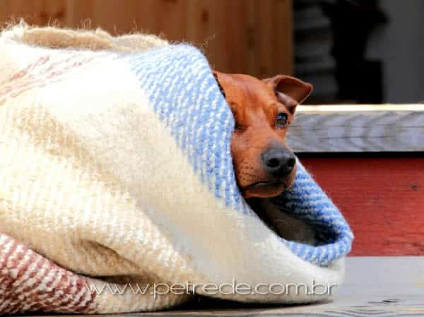 cachorro-inverno-frio-petrede