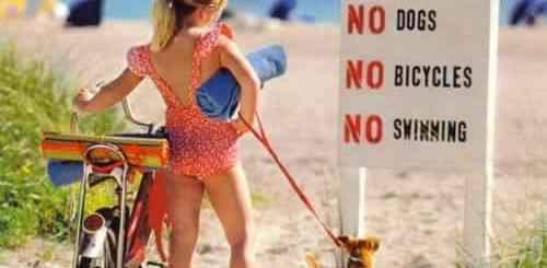 praia-proibido-cachorro-petrede