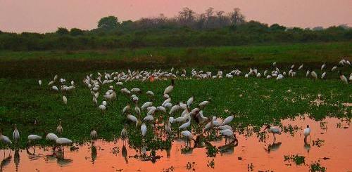 aves-pantanal-daniel-de-ganville
