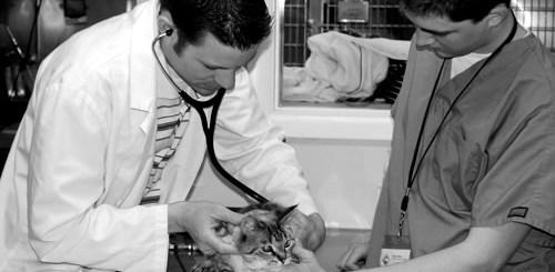 gato-consulta-exame-petrede