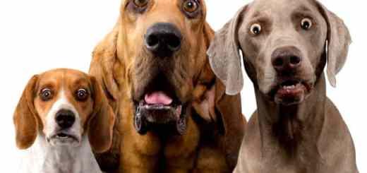 cachorros-surpresos-espantados-pasmos-choque-petrede