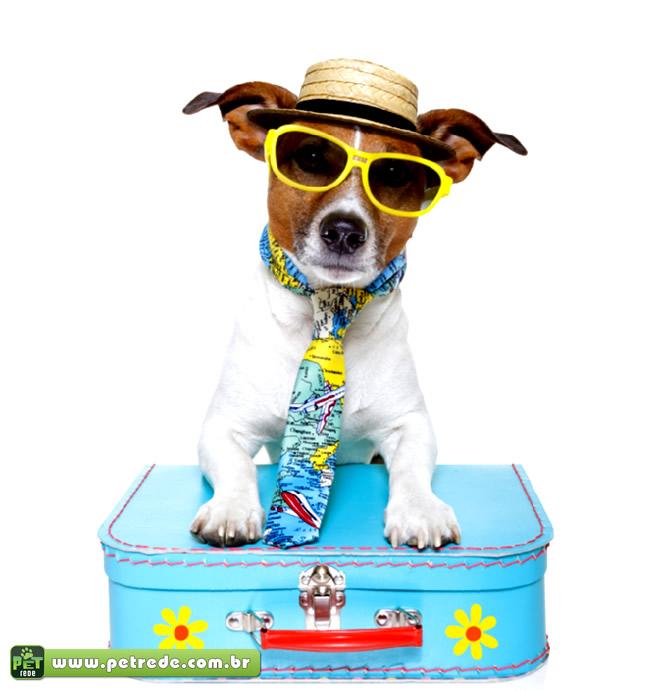 cachorro-oculos-ferias-viagem-turista-petrede