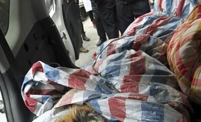 O tigre foi encontrado morto dentro de carro / Foto: Reuters/China Daily
