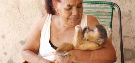 Chico, no colo de Elizete: carinho, coleira e corrente / Foto: Fabio Rodrigues