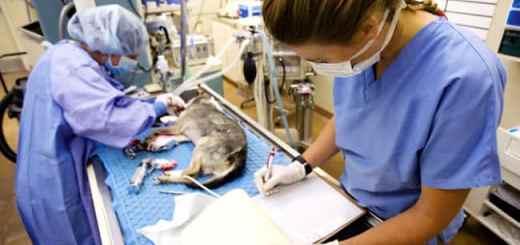 hospital-cirurgia-castracao-gato-operacao-medico-veterinario-petrede