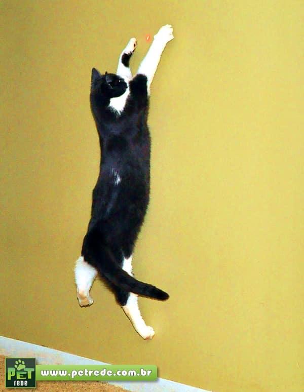 gato-brincadeira-laser-petrede