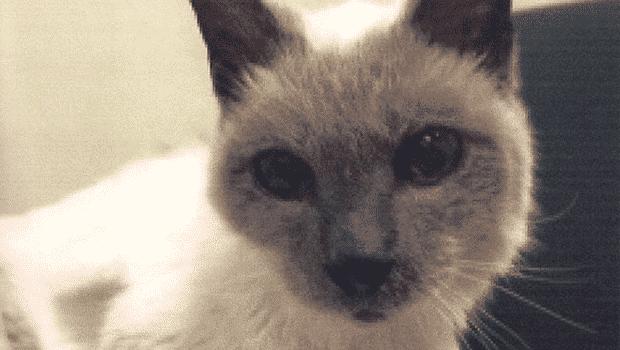 morre-gato-mais-velho-do-mundo-guiness-petrede