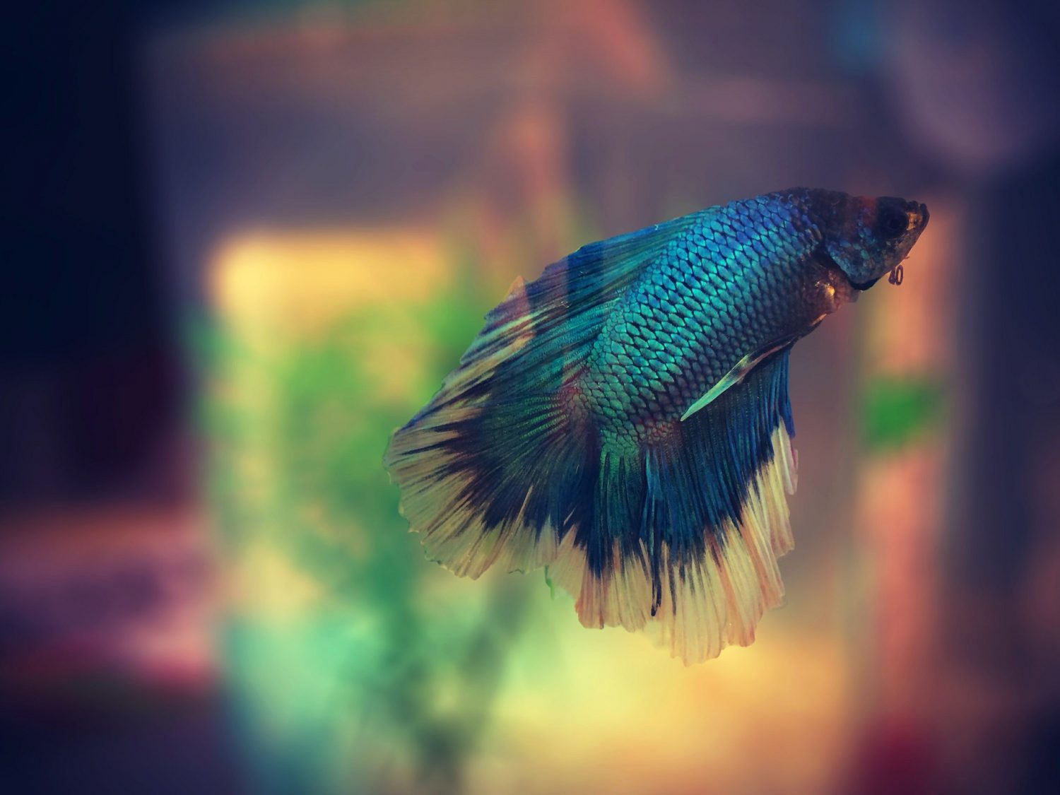 5 Best Heaters For Betta Tanks Pets Life