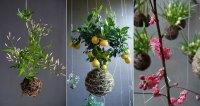 String gardens | Gardening Forums