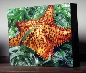 FC_Starfish on Shelf