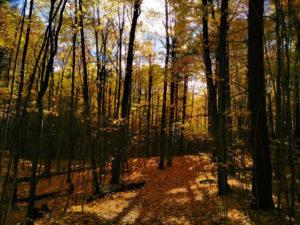Fall colours in Durham forest where I go mountain biking.
