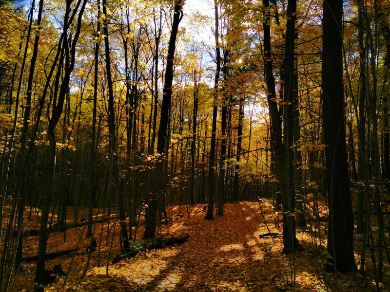 Fall colours in Durham forest where I go mountain biking.