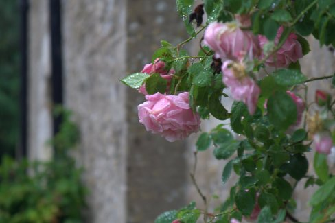 Taken after the rain in England