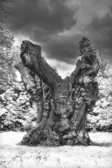 HDR of a creepy tree