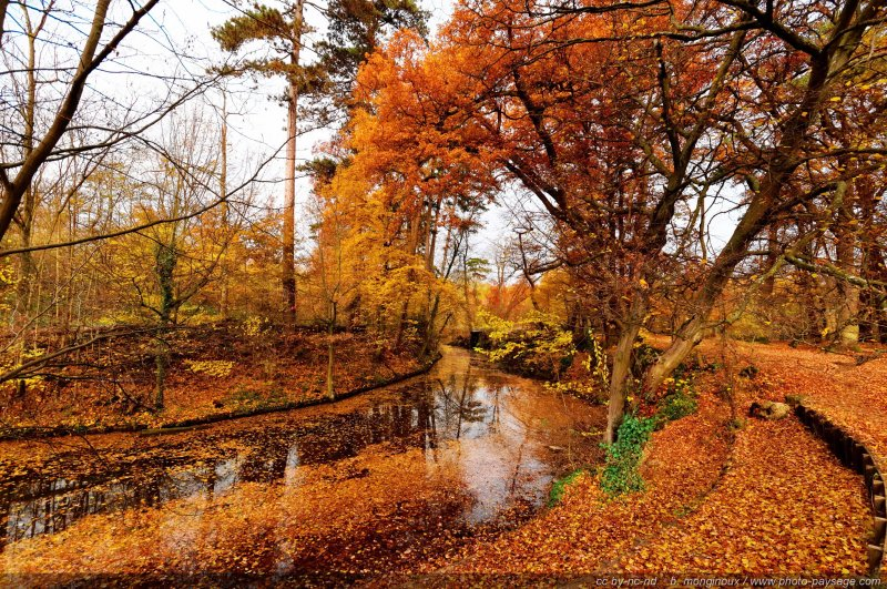Japan Fall Colors Wallpaper C Est L Automne Bois De Vincennes Paris France