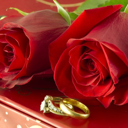 Animal Print Desktop Wallpaper Red Roses And Wedding Rings On Gift Box Photober Free