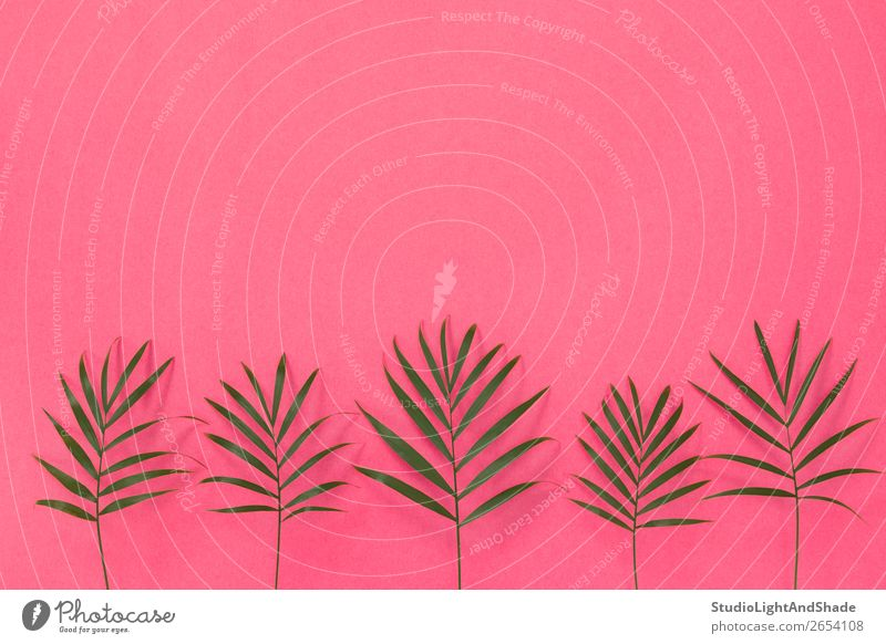 Succulent plants on yellow and pink background - a Royalty Free