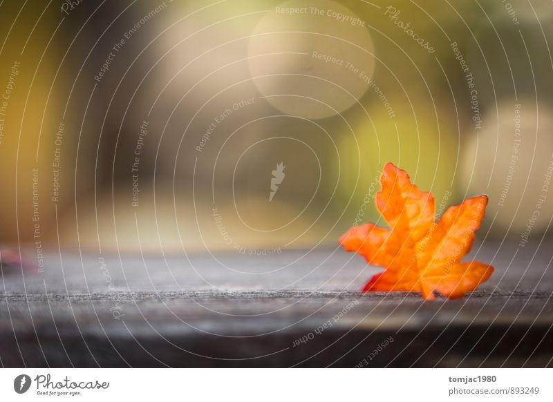 Free Wallpaper Fall Colours Nature Plant Leaf Autumn A Royalty Free Stock Photo From