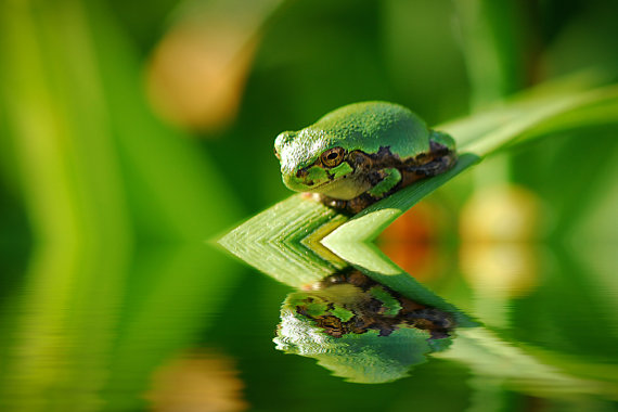 Rain Drop Wallpaper Hd 25 Awesome Tree Frog Pictures