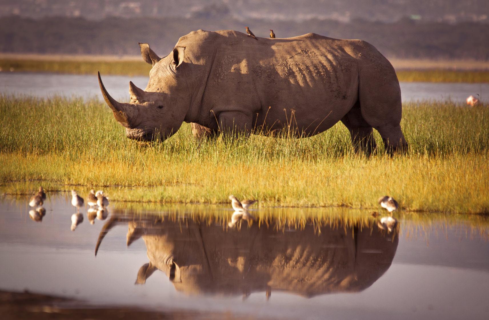 Rinoceront: Big Five dell'Africa