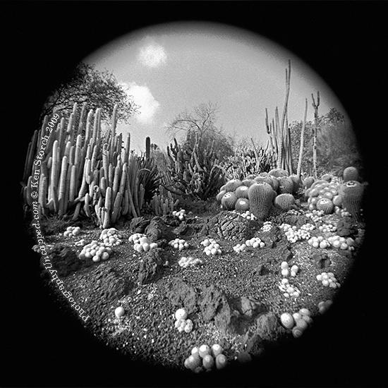 Preternatural Cactus Landscape