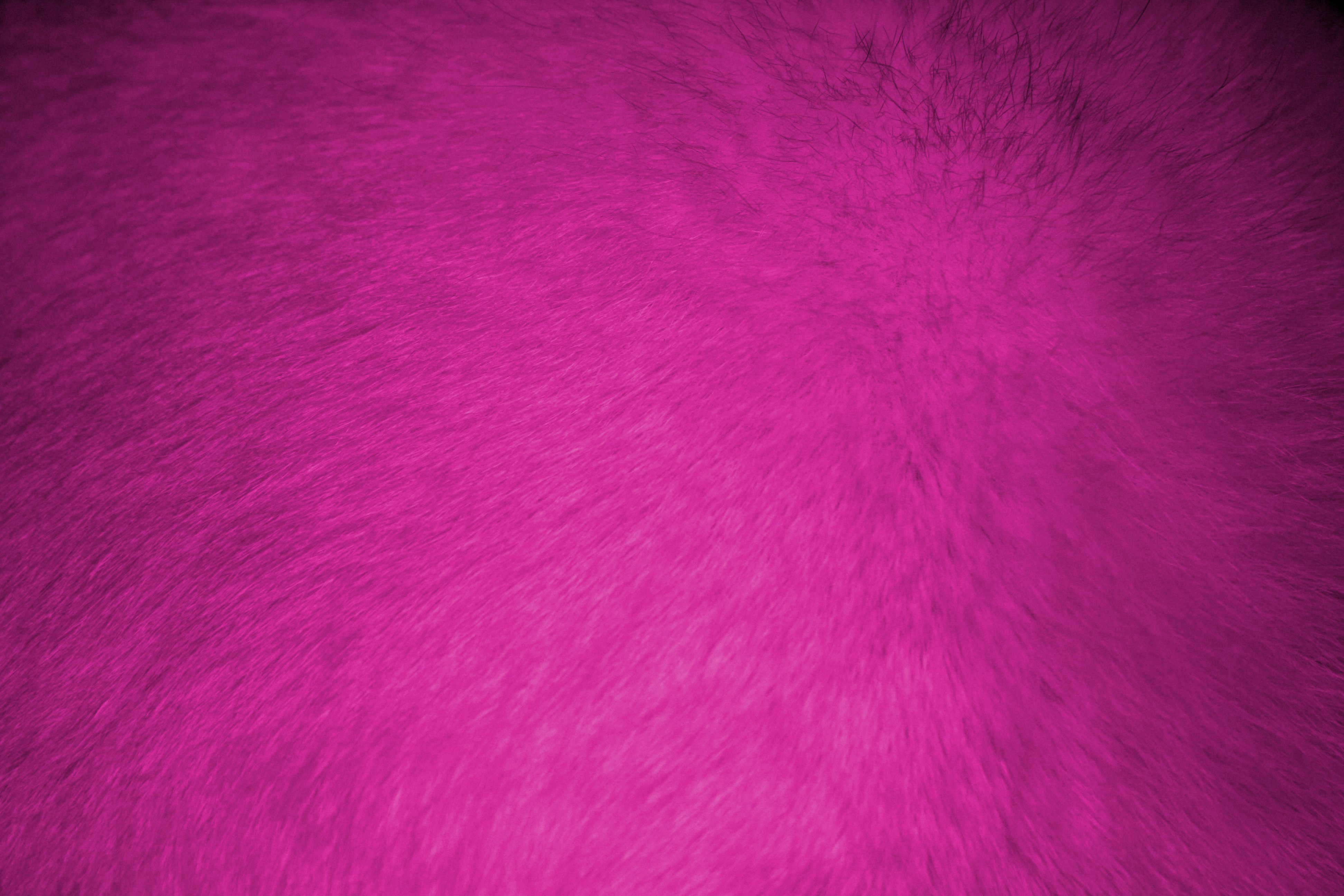 Hot pink fur texture free high resolution photo dimensions 3888 2592 click here to download full resolution image