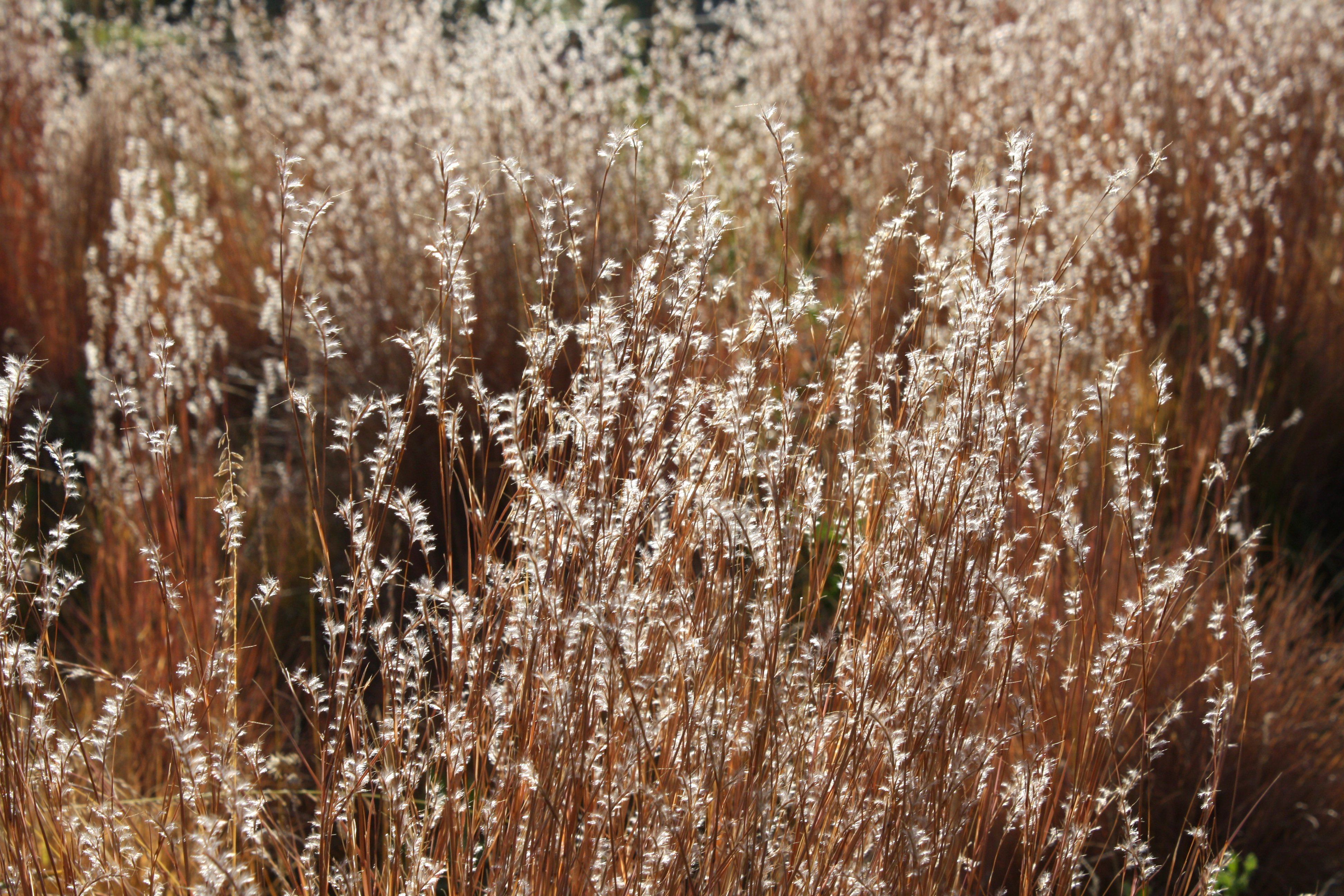 Fall Wooden Wallpaper Sunlight On Fall Meadow Grass Close Up Photos Public Domain