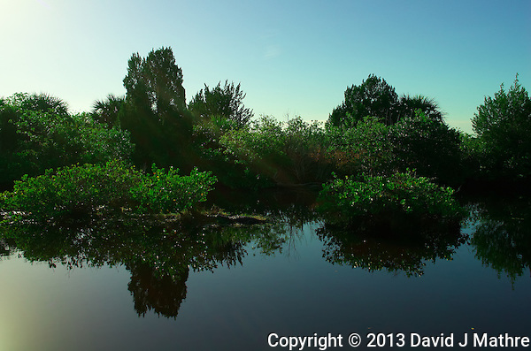 Can You Find the Alligator? Reflections on a Canal along Black Point Wildlife Drive in Merritt Island National Wildlife Refuge. Image taken with a Leica X2 camera (ISO 100, 24 mm, f/5.6, 1/2000). (David J Mathre)