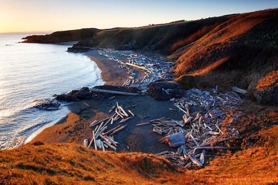 Driftwood strewn beach, Grandma's Cove, American Camp, San Juan Island National Historical Park, San Juan Island, Washington, USA