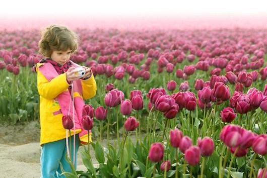 Girl photographing field of tulips, Skagit Valley, Washington, USA (Copyright Brad Mitchell Photography.9601 Wall St.Snohomish, WA 98296.USA.425-418-7279.brad@bradmitchellphoto.com)