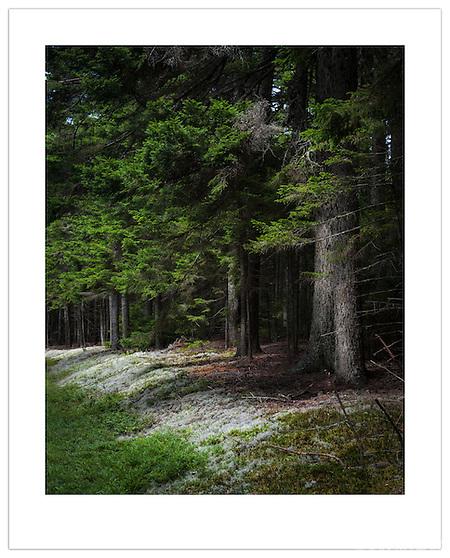 Acadia National Park, Maine, U.S.A. (©2012 Ian Mylam)
