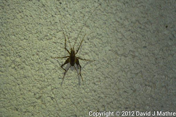 Basement Critters. Image taken with a Leica V-Lux 30 camera. (David J Mathre)