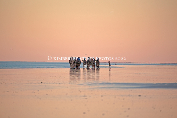 A camel train at last light north of the rocks on Broome's Cable Beach.  There are three camel operators currently conducting tours on Cable Beach, one of the world's most famous beaches. (Annabelle Sandes/© Kimberley Media)