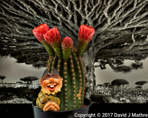 Troll with blooming barrel cactus. Indoor spring in New Jersey. Image taken with a Nikon Df camera and 105 mm f/2.8 VR macro lens (ISO 100, 105 mm, f/11, 1/30 sec) +SB-910 flash. (David J Mathre)