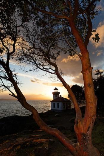 Lime Kiln Point Lighthouse framed by Pacific Madrone, Lime Kiln Point State Park, San Juan Island, Washington, USA