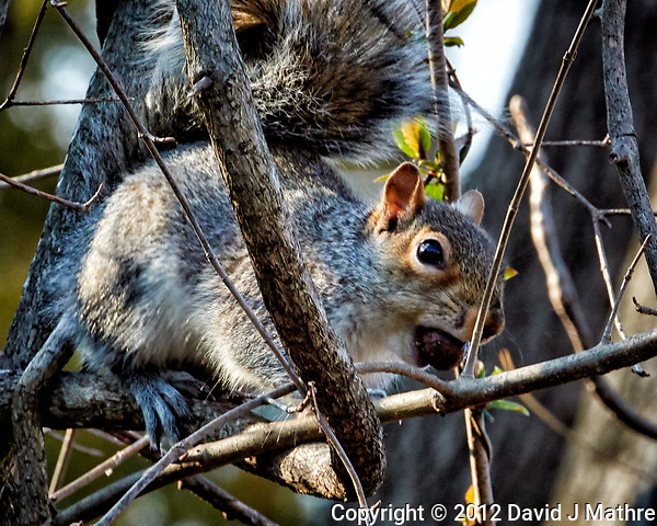 Squirrel with a nut on a sunny winter day. Backyard nature in New Jersey. Image taken with a Nikon 1 V1 camera, FT1 adapter, and 70-200 mm f/2.8 VRII lens (ISO 450, 200 mm, f/8, 1/125 sec). (David J Mathre)