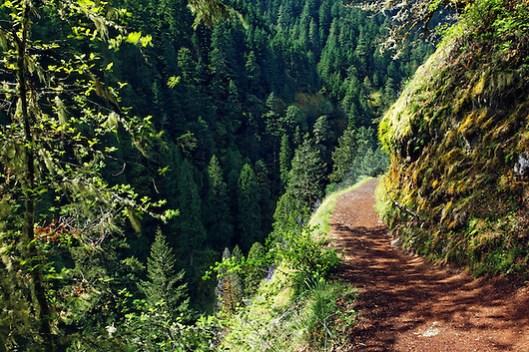 Eagle Creek Trail cut into cliff, Eagle Creek Recreation Area, Columbia River Gorge National Scenic Area, Oregon, USA (Brad Mitchell)